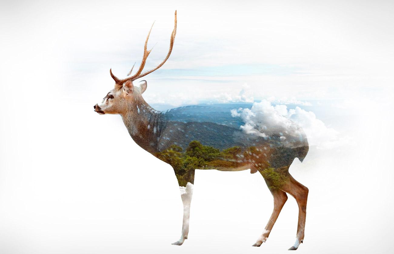 antilope-edg-web